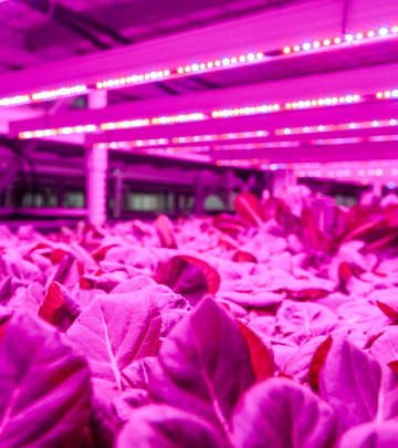 Cultivation under LED lighting